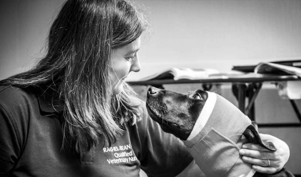 Canine First Aid and Wellbeing