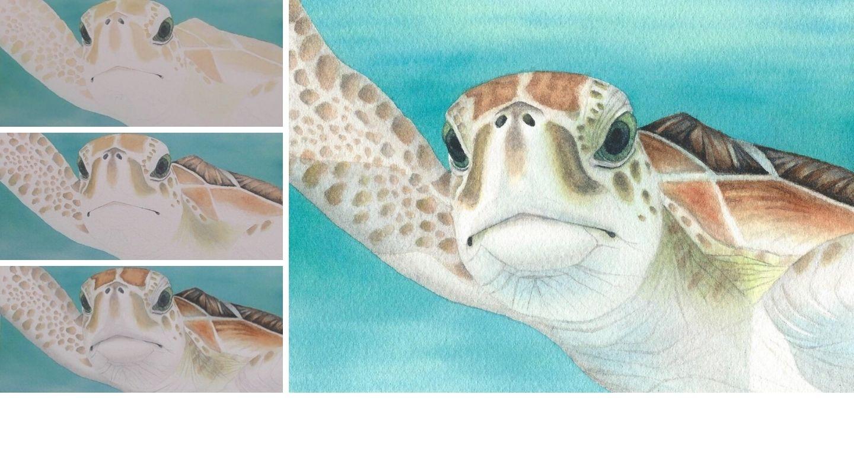 watercolor sea turtle rebecca rhodes