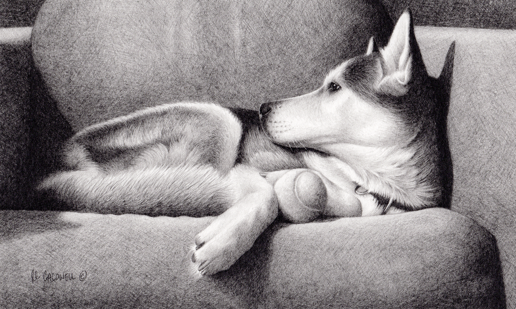 The finished graphite drawing of a dog on a sofa by artist Robert Louis Caldwell