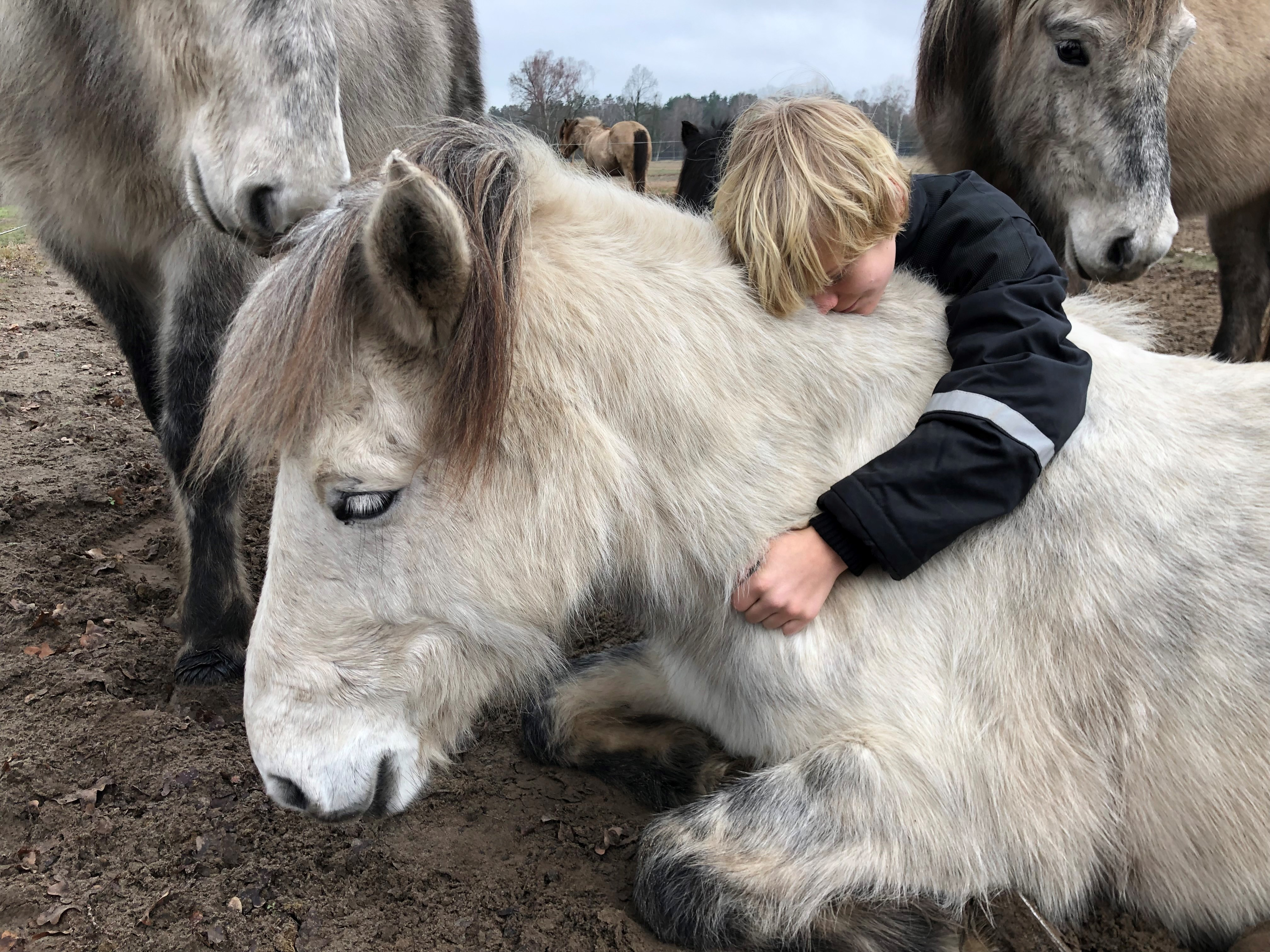 Horses Healing Humans-Wellness Retreat