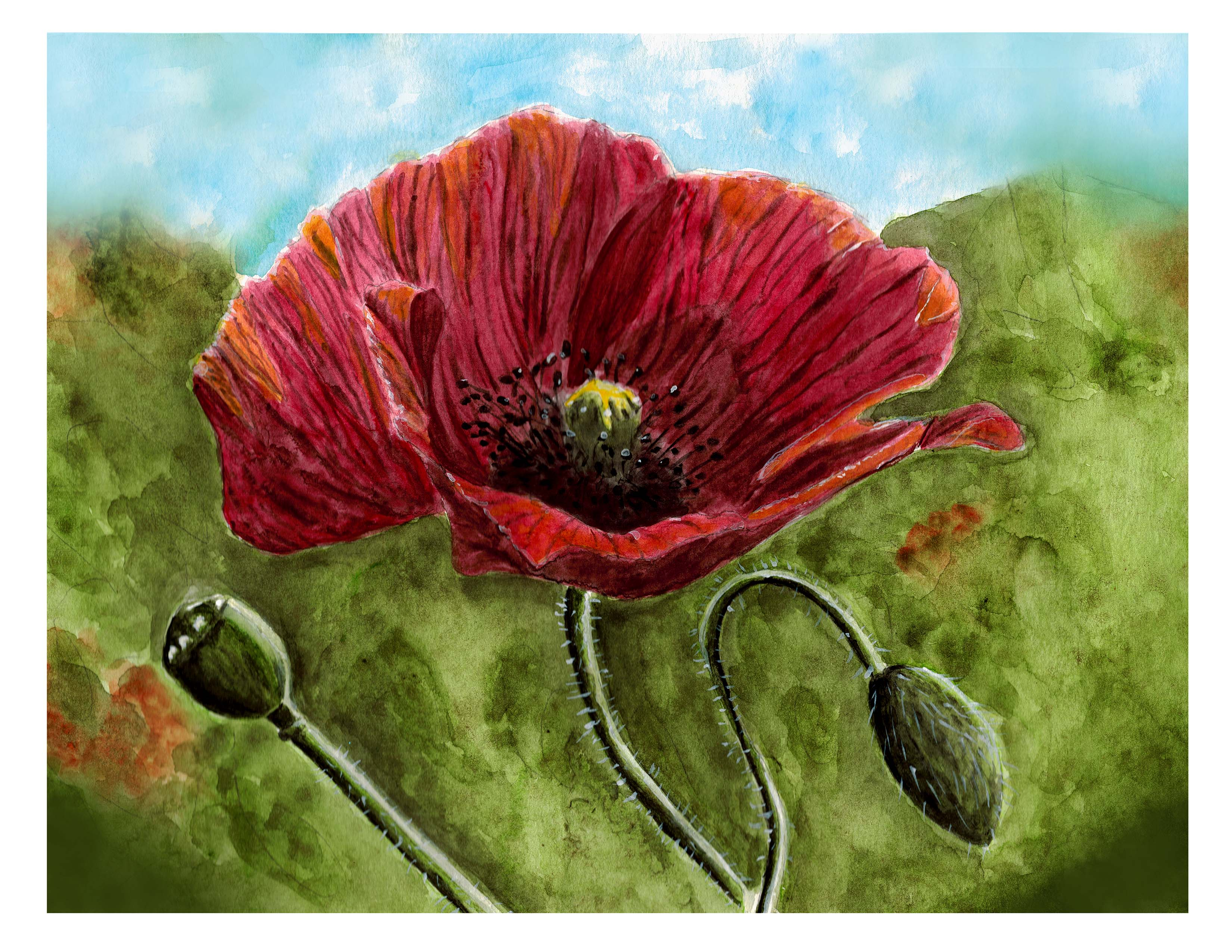 Red Poppy in Watercolor by Jessica Keeney
