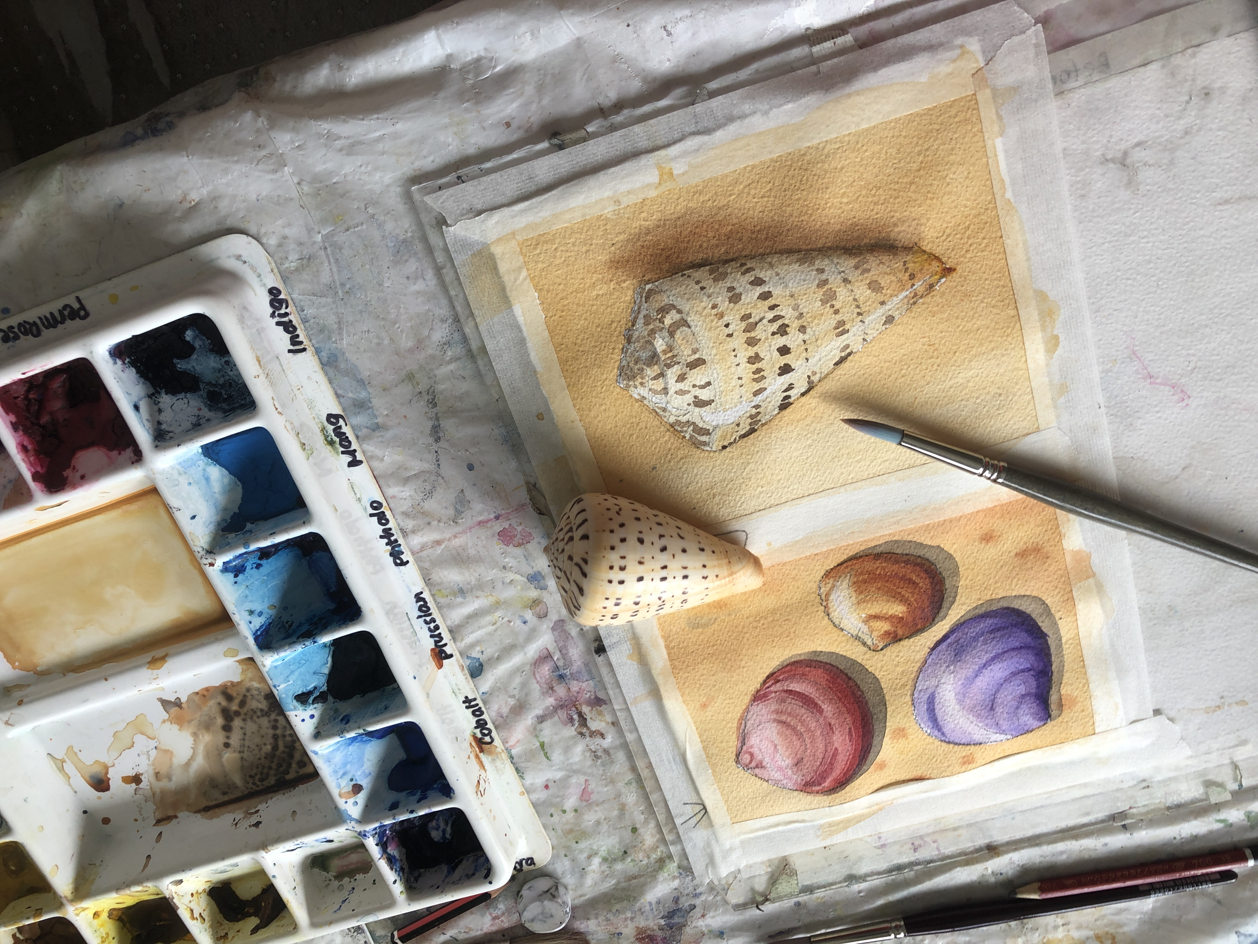Still life painting - Online Watercolor course and classes teaching absolute beginners how to paint in watercolour with Jenny Gilchrist and Northern Beaches Watercolour