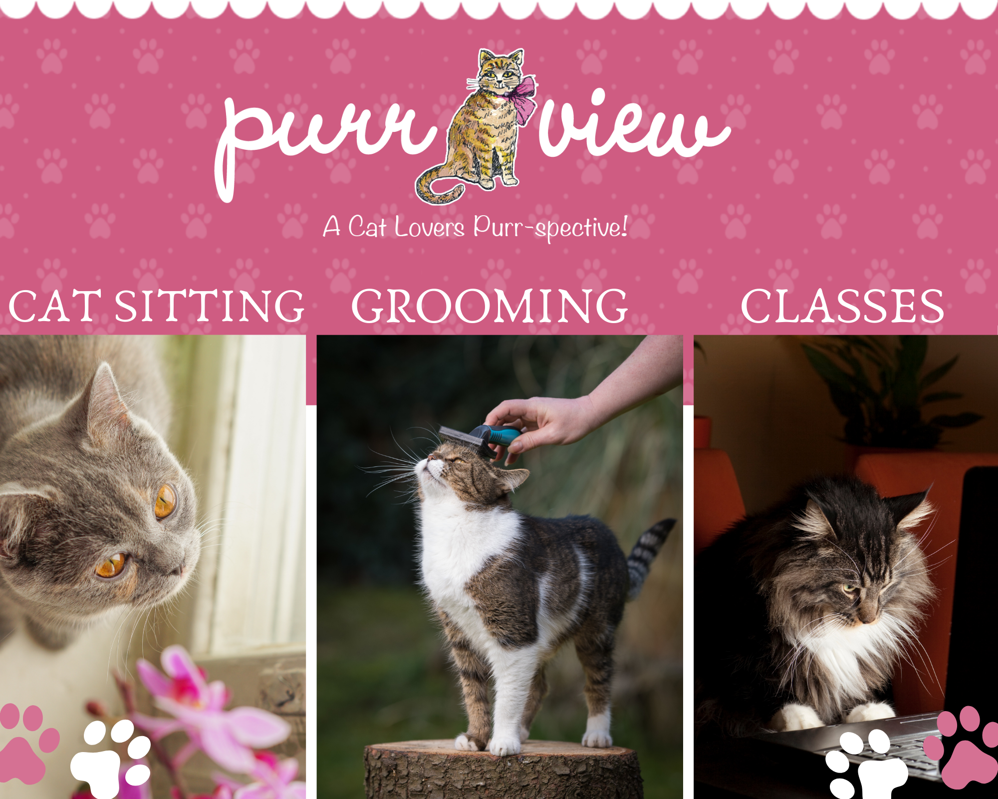 purr view banner with cats