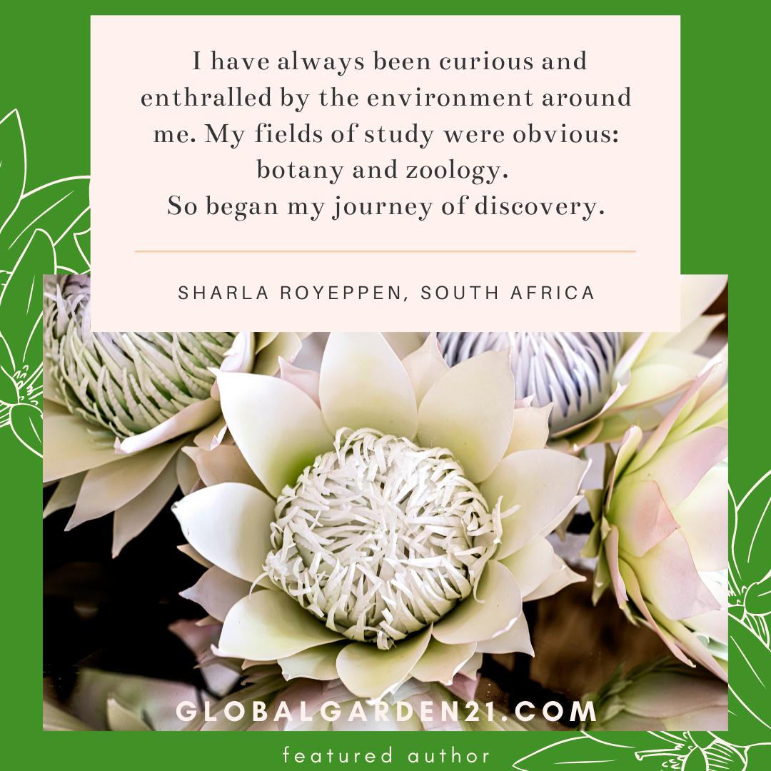 paper protea sharla royeppen