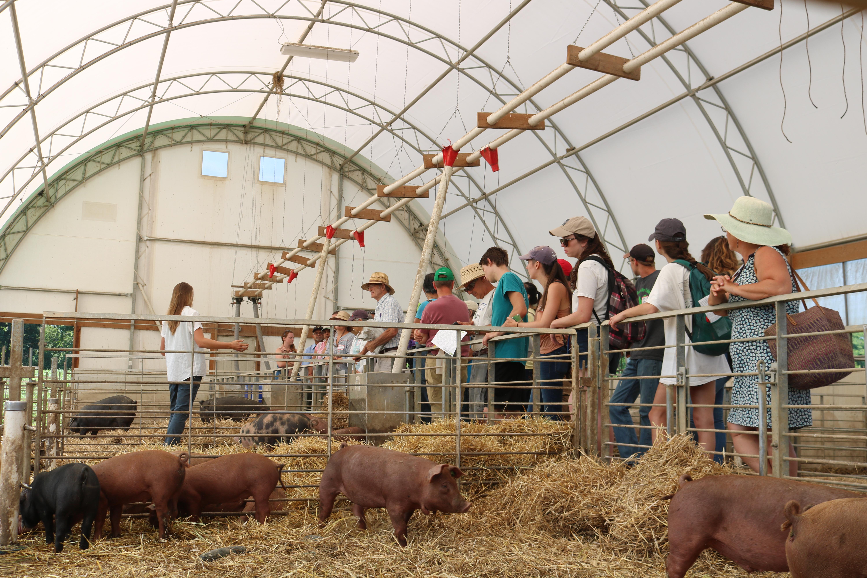 hog facility