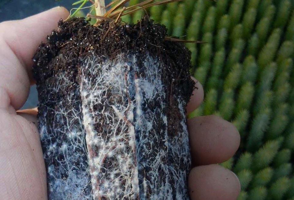 La Microbiología del Suelo y su Impacto en la Producción Agrícola