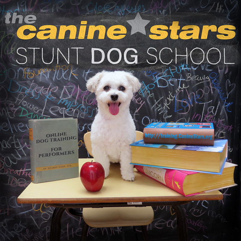 Ginny wants to enroll in Stunt Dog School for Christmas!