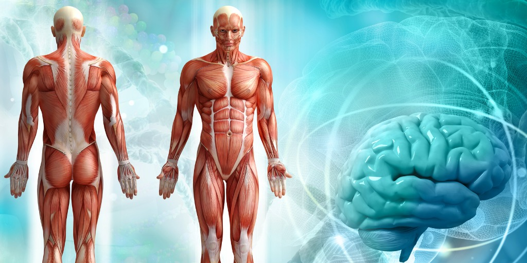 yoga anatomy and physiology
