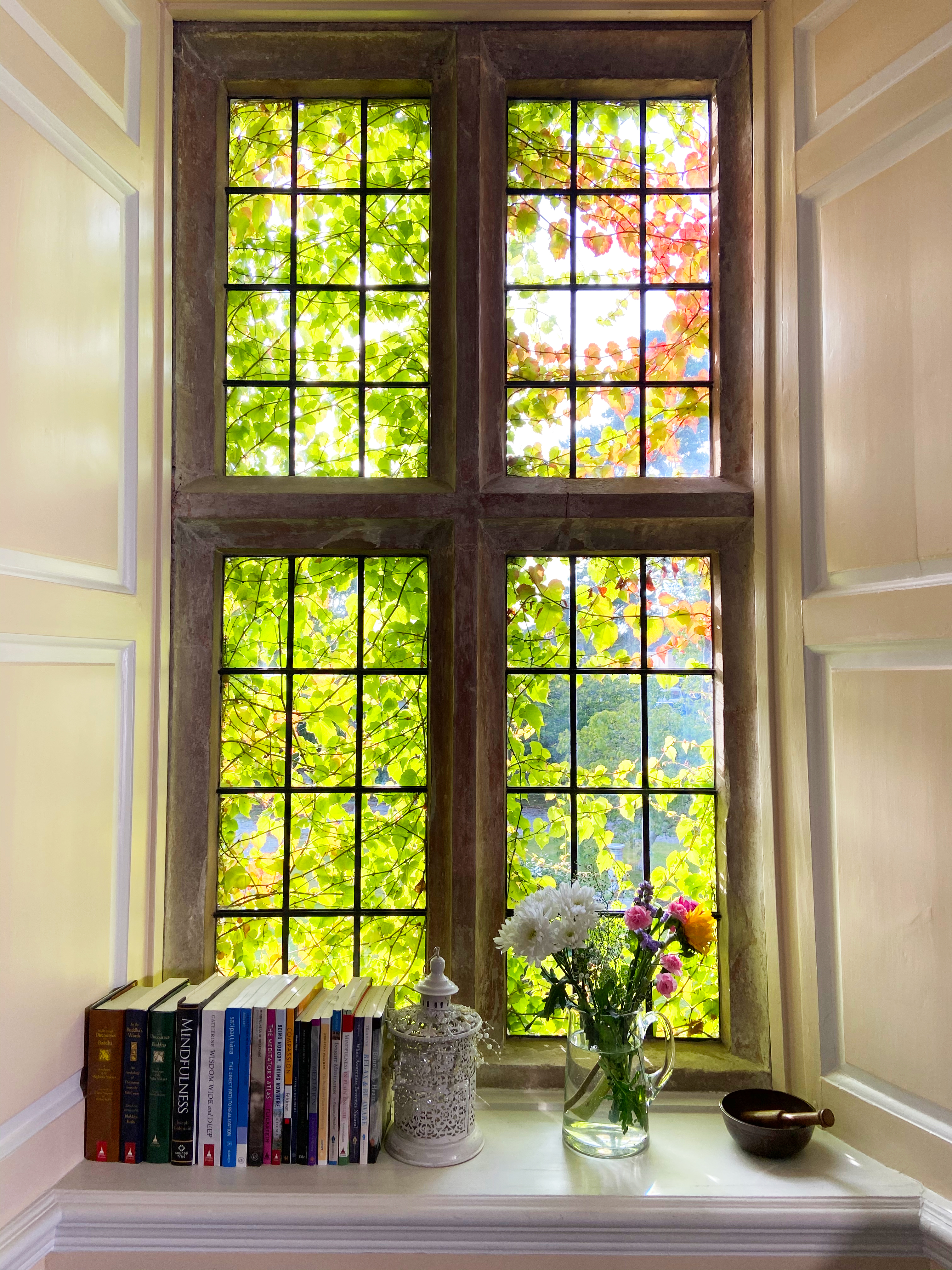 A window overgrown with ivy