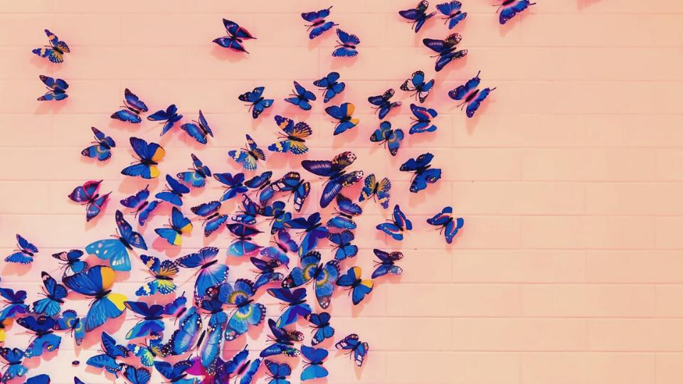 farfalle persone altamente sensibili alta sensibilità hsp