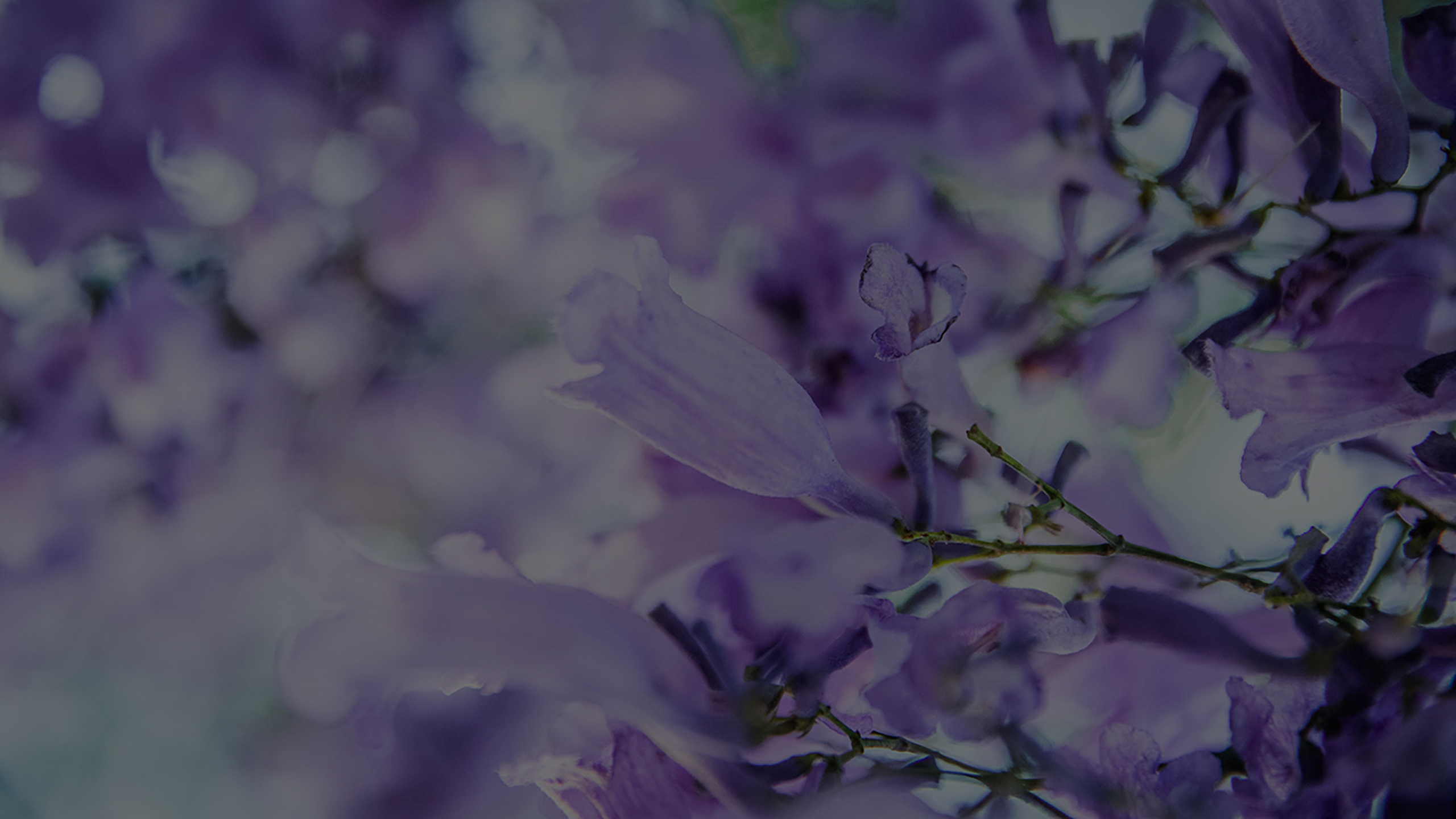 photo of lavender flowers