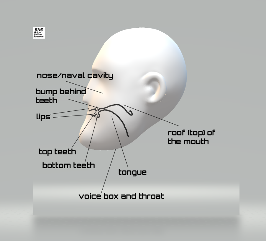 British Native Speaker Profile Head, Face and Mouth Diagram