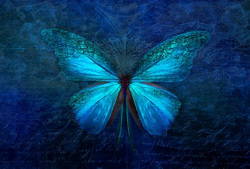 Picture: Blue butterflyText: Dream like dreamers do...and soul dance