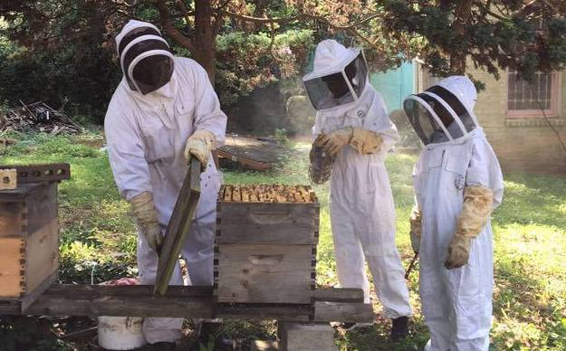 Ilia Rashad & sons backyard beekeeping