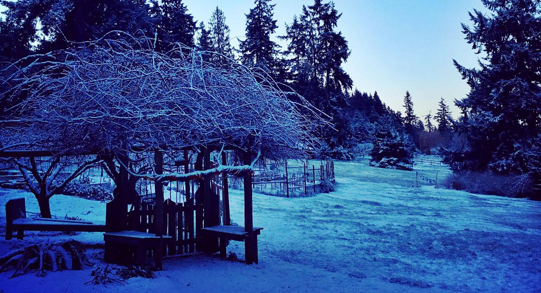 Aldermarsh in winter