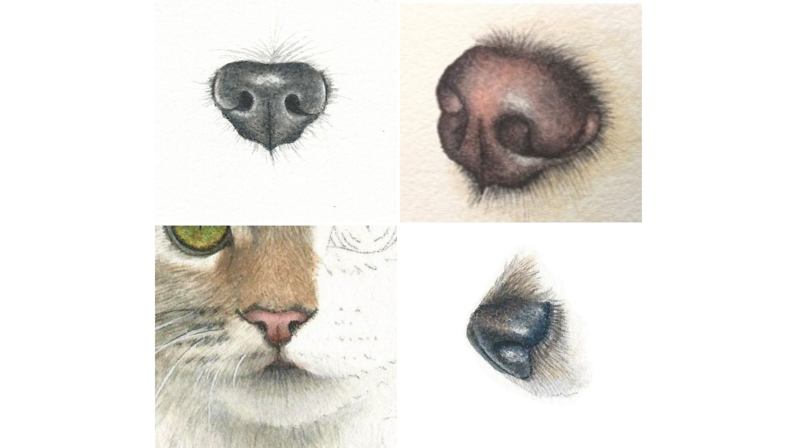noses in watercolor by rebecca rhodes