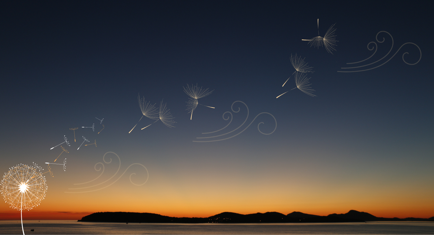 sunset background with dandelion blowing across the image