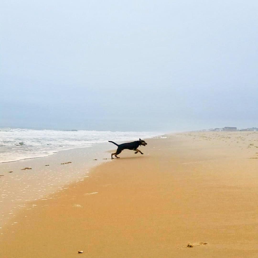 Cold Creek Dog Training