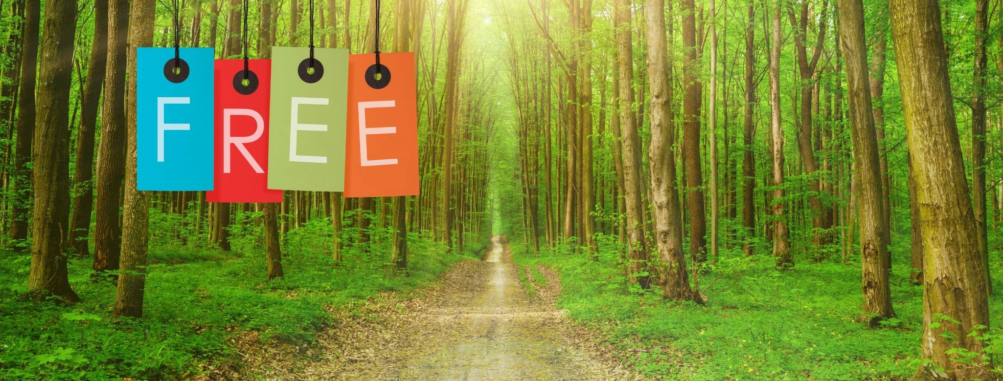 Forest School Activities Free Mini Course